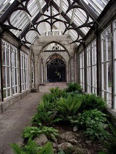 Old conservatory!!! Bebe'!!! Love the fern garden!!! Now just add some trees and flowering plants!!! A little seating area too would be nice!!!