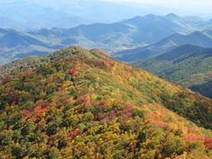Gorgeous! Lovely trees changing in the fall #smokymountains