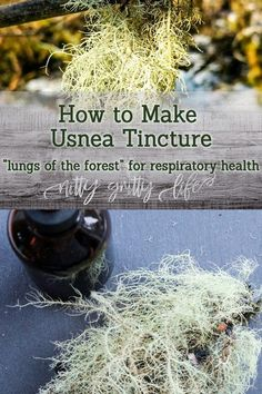 Usnea has a great affinity for the respiratory system, as well as being a profound infection fighter for the whole body. Medicinal tincture recipe included. #usnea #tincture #uses #herbalmedicine #herbs #herbalist Natural Remedies For Insomnia, Cold Home Remedies, Cough Remedies, Health Remedies, Herbal Remedies, Good Health Tips, Health And Fitness Tips, Health Advice, Healthy Eating Tips
