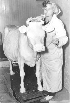 Norma Lyon with her first butter cow, 1960 (Courtesy of Iowa State Fair)