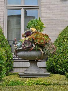 Sukkulenten-Pflege- Garten-traditionell-Haus-Steintopf