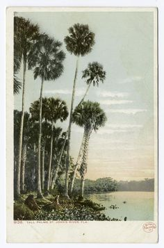 Tall Palms, St. Johns River, Florida