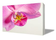 Hey, I found this really awesome Etsy listing at https://www.etsy.com/listing/240325607/phalaenopsis-1-canvas-print