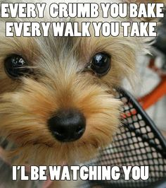 """Every crumb you bake, every walk you take… I'll be watching you!"" This looks like my dog."