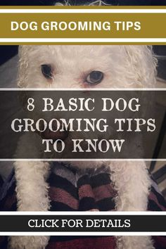 277 Simple Tips For Dog Grooming at Home * Check this useful article by going to the link at the image. #DogGroomingTips #doggroomingathome