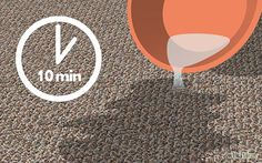 Get Dog Urine Smell out of Carpets