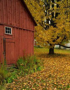 Vermont Barn in Autumn - Peacham, Vermont
