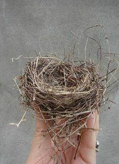 Obsessed with nests!!