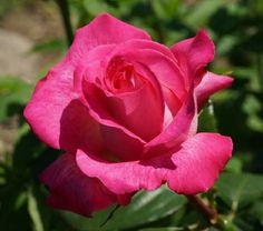 Christelike Boodskappies: Gebed - Nina Smit - Hoe ouer ek word