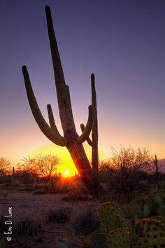 Sunset over Tucson, AZ desert