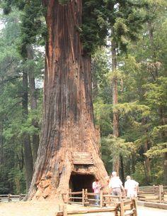 Amazing Chandelier Tree – USA
