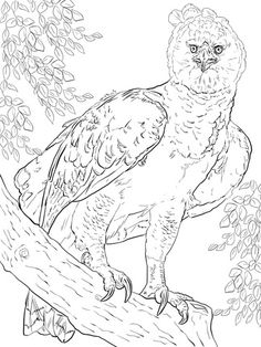 Harpy Eagle Coloring Page Free Printable Coloring Pages arpa