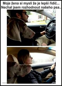 Dog's reaction when i drive vs when my wife drives - LOL Indian - Funny Indian Pics and images Funny Kids, Funny Cute, The Funny, Daily Funny, Funny Memes About Girls, Funny Animal Pictures, Funny Photos, Funny Animals, Crazy Pictures