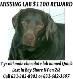 Please keep an eye out for QUICK - his family wants him home! BAY SHORE, NY  If you see him or can contain him please CALL: 631 383 8903 OR 361 682 3697 $1100 Reward.  PLEASE WATCH FOR HIM. HE IS PROBABLY TERRIFIED AND HIS FURPARENTS BESIDE THEMSELVES.