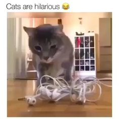 Funny Animal Memes, Funny Cat Videos, Cute Funny Animals, Funny Animal Pictures, Cute Baby Animals, Hilarious Stuff, Funny Logic, Funny Videos Of Animals, Funny Cat Gif