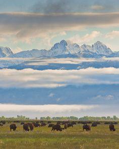 Partez à la rencontre des bisons dans le Colorado pendant un séjour équestre dans un ranch ! #chevaldaventure #USA