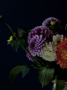 ,,I think these are Zinnias!