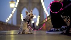 illuminated dog leash for when the pup needs to go out RIGHT now.
