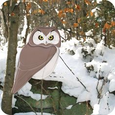 Boreal Owl in Winter. Set of six notecards with envelopes. $14.99 CDN. Free shipping within Canada and continental U.S.A.