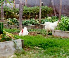 5 consigli indispensabili per creare un orto in città