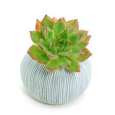 White Porcelain Ceramic Flower Pots / Planter Pots: Blue Stripes Pebble, Cactus, Succulents, Pottery, Vase, Housewarming, Home Décor by BloomyLifePottery on Etsy