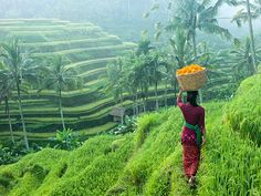 A woman in traditional clothing carries a basket of flowers along rice terraces in Ubud, Bali, Indonesia. Ubud is a town on the Indonesian island of Bali. Places Around The World, Oh The Places You'll Go, Places To Travel, Places To Visit, Around The Worlds, Bali Lombok, Bali Travel Guide, Asia Travel, Denpasar