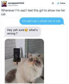 The Sad Cat: