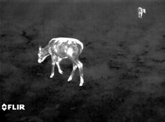 Using Thermal Technology To Detect Wildlife / Tester Blog