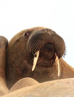 """""""Don't think I have not seen you!"""" Photo taken by John D. #OceanwideExpeditions #PhotoContest"""