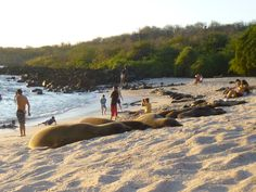 Conservation Volunteering Gap Year in the Galapagos Islands Sea Lions, Galapagos Islands, Gap Year, Conservation, Time Out, Sabbatical Leave, Canning
