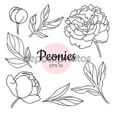 Векторный набор изолированных o монохромный черный и белый пион цветок — стоковая иллюстрация #75301803