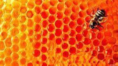 Download wallpaper: bee, Honey, honey honeycomb, download photo ...