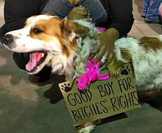 Literally Just 28 Photos Of Dogs Protesting Donald Trump