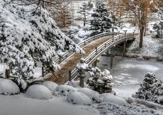Dealing with Snow in the Botanic Gardens in Chicago