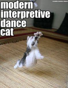 Cute interpretive dance kitten
