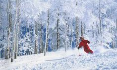 Photograph:Colorado's fine, light snow attracts millions of skiers every year.
