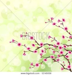 Cherry Blossom Images, Illustrations, Vectors - Cherry Blossom Stock Photos & Images | Bigstock