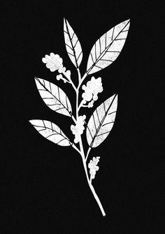 Illustrations by Hausblok / Josh Robinson for Origin Coffee Roasters. www.hausblok.co.uk