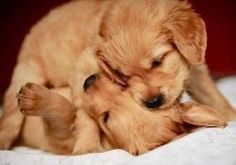 cute dogs images for dp