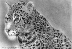 Where to watch the leopard by Anastasya-Murashova.deviantart.com on @deviantART