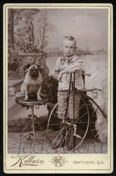 vintage dog photos cabinet cards - Google Search