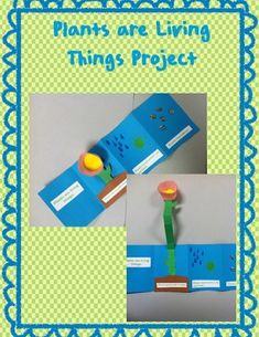 This is an art project that helps the students learn why plants are living things.