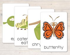 Free Life Cycle of a Butterfly flash cards