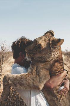 Lion hug Photo by Fabian Gieske -- National Geographic Your Shot I Love Cats, Big Cats, Baby Animals, Cute Animals, Gato Grande, Lion Love, Kevin Richardson, Mundo Animal, Funny Animals