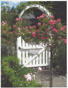 Me & Cisco Visit Bev's How Sweet The Sound for Pink Saturday participants. White Picket Fence, Picket Fences, Arbor Gate, Rose Arbor, Country Fences, Rose Trees, Hollyhock, Climbing Roses, Garden Gates