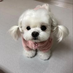 Awesome pretty dogs detail are offered on our web pages. Cute Teacup Puppies, Cute Little Puppies, Cute Dogs And Puppies, Baby Dogs, Cutest Dogs, Tiny Puppies, Doggies, Pet Dogs, Baby Animals Super Cute