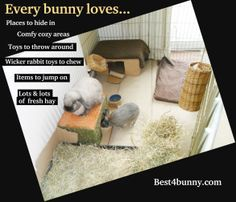 What every bunny loves in their home