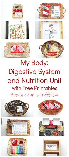 Montessori-inspired digestive system and nutrition unit for kids with free printables.