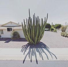 Organ Pipe Cactus, Arizona, Usa