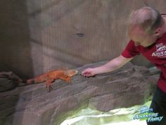 SeaQuest Interactive Aquarium - Utah's Adventure Family Get up close and personal with lots of different animals including lizards, birds, and sting rays. This was a big hit with our kids!